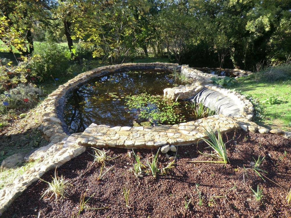Le bassin aquatique en forme de haricot.