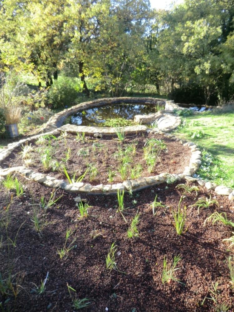Les deux derniers bassins filtrants, avec des plantes antiseptiques et oxygénantes.